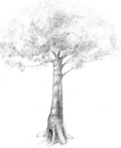 arból (c) gómez alvarez